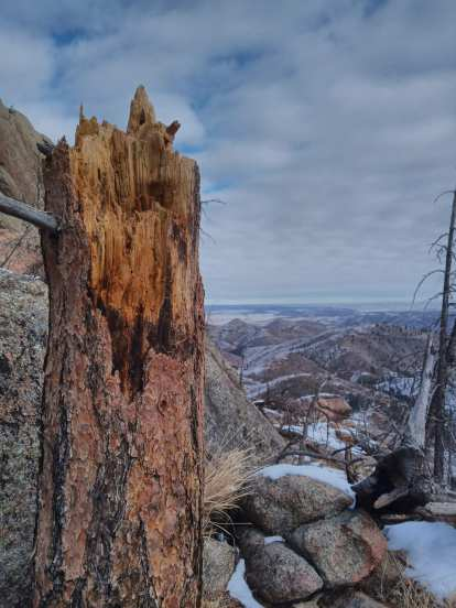 broken tree and boulders with view towards the northeast of Greyrock