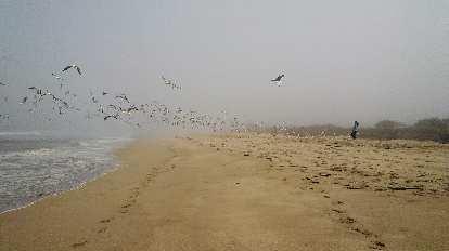 A flock of birds taking flight.