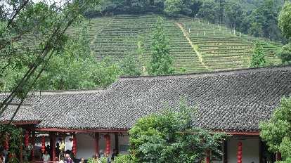 The Longjing tea plantation.