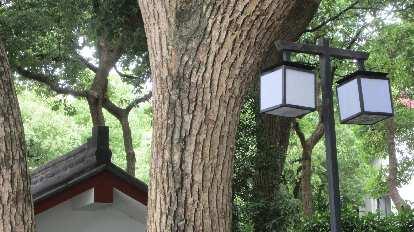 Streetlamps in Hangzhou.