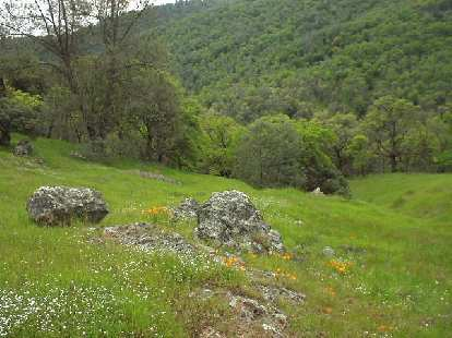 We picnicked at this site with lots of wildflowers.