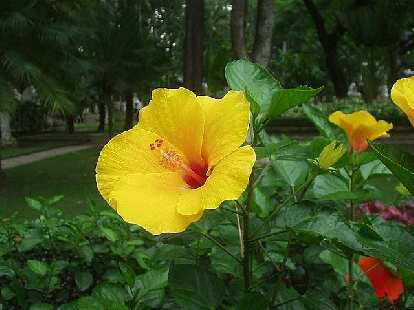 Flower in Tao Dao Park.