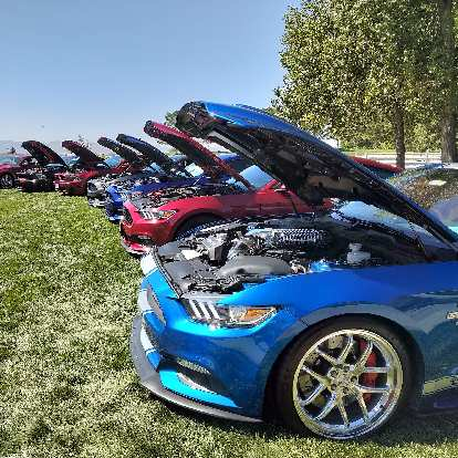 A whole row of modern Ford Mustangs with their hoods open.