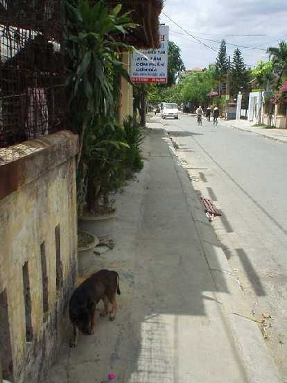 Dog roaming the sidewalk.