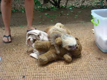 I think this sloth really liked his teddy bear.