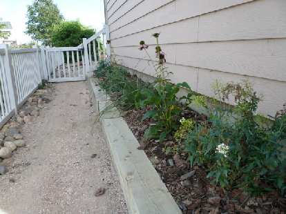 [After] The new perennials to the left of the house are out of bloom, but I hope they will look nicer next year.