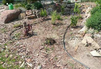[In progress] Putting the drip lines in after planting many perennials.