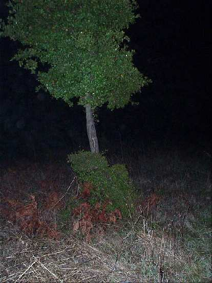 The summit, in contrast, was on private property, marked by this little oak tree.  Don't ask me how I got this picture, as I do not condone trespassing and BREAKING THE LAW!