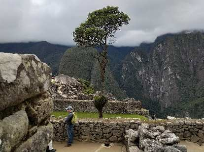 Tree at Machu Picchu.