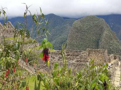Gardens at Machu Picchu.