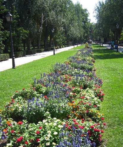 More flowers in el Parque del Retiro.