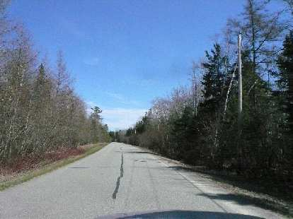 I loved all the trees in Maine.  This is the road going to the Owls Head Transportation Museum.