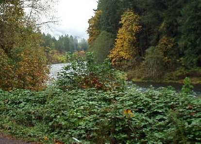 The McKenzie Highway runs by the McKenzie river, from Eugene to Sisters.