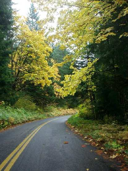 Brilliant yellow leaves dangled above while navigating the winding roads.