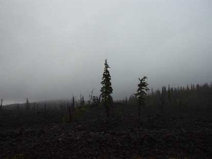 At the top of McKenzie pass the land gave way to lots of lava rocks.  Unfortunately, due to the rain and fog, I was not able to see the Three Sisters (mountain peaks) from here.