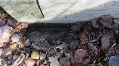 betta fish buried in back yard