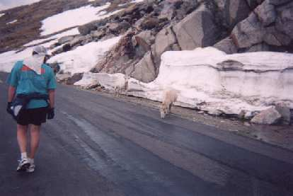 [Mile 7, 9:25 a.m.] Up ahead were some mountain goats.  By this time, many people (like the guy on the left and myself) were walking.