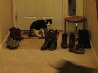 Oreo checks out some shoes.