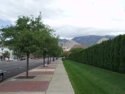 There were lots of trees lining all of the sidewalks in Ogden.