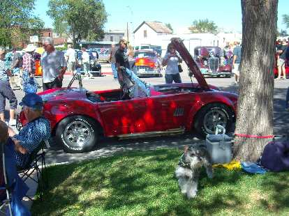A funny-looking dog in front of a red Cobra replica.