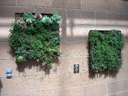 Plants used as wall art.