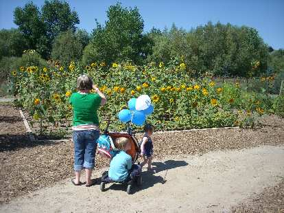 Charis and Zoe in front of many sunflowers.