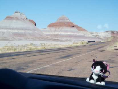 Our Asiatic Wildcat mascot in the Petrified Forest.