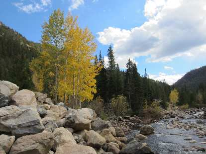 Aspens along the Poudre River, where we went in for a dip.
