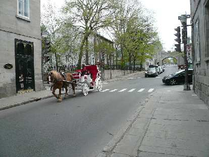 brown horse pulling white and red carriage down street in Quebec City