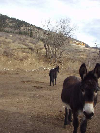 A donkey and a horse enjoy this beautiful spring-like late-December day.