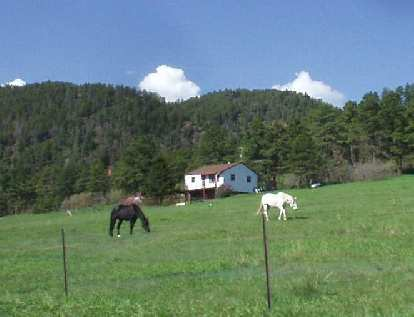 [Mile 53, 9:30 a.m.] Wild horses.