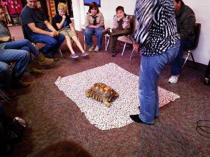 A tortoise.