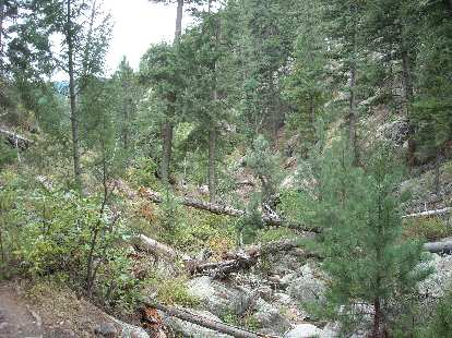 Downed trees in the Poudre Canyon on our hike towards Grey Rock.