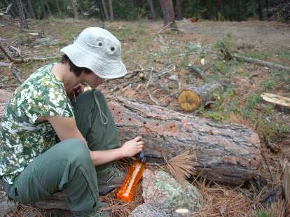 Sarah checks out some logs that had beetle kill.