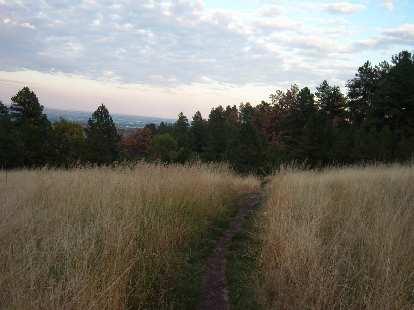 The trail going through a golden field of waist-high weeds.