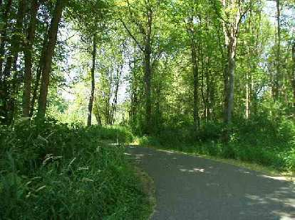 The Burke-Gilman trail was very green!