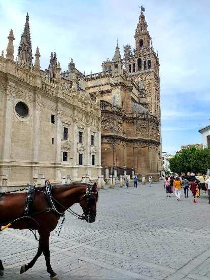 Horse at Alcázar of Seville.