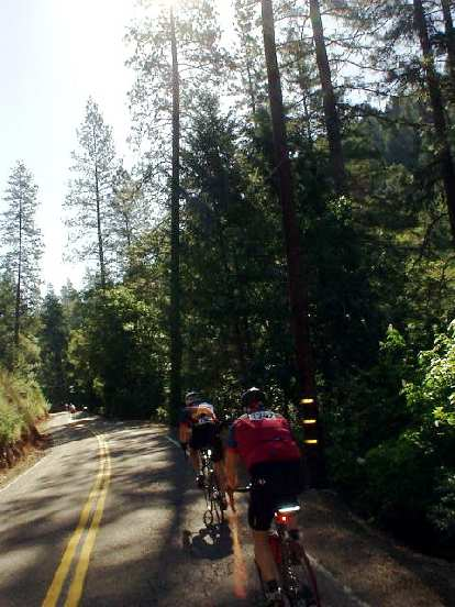 [Mile 39, 9:08 a.m.] As we approached Volcano the scenery turned greener and shadier, with towering fir trees.