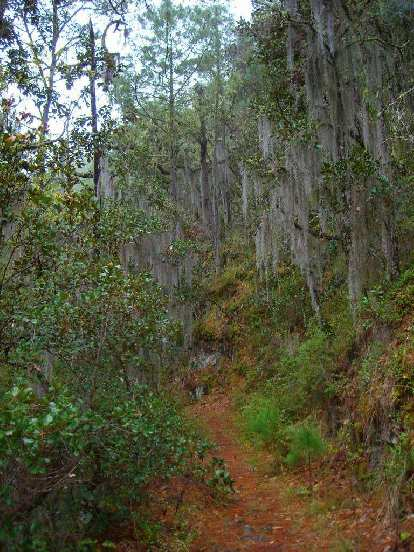 Lots of Spanish moss over the trail.