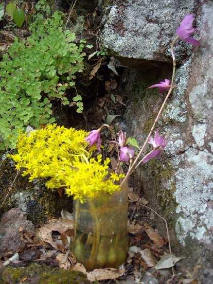 Flower arrangement of marigolds.