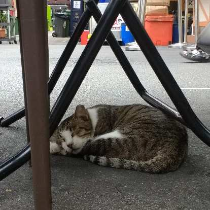 A cat in Singapore that looked very similar to my cat Tiger.