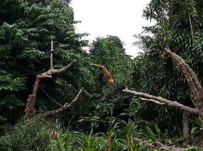 Thumbnail for Singapore Zoo