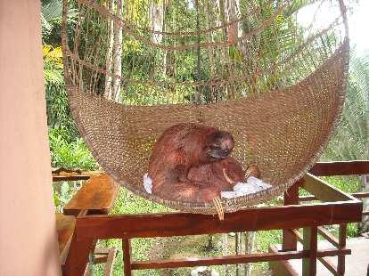 Thumbnail for Sloth Sanctuary