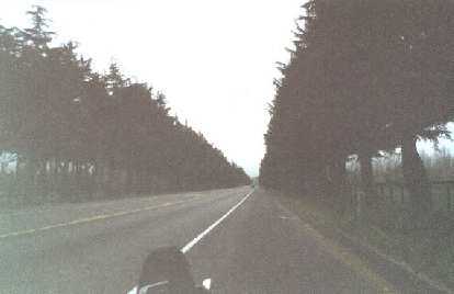 riding on shoulder, tree-lined roads, 2000 Solvang Double Century
