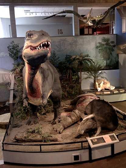 Tyrannosaurus Rex, Triceratops, St. Louis Science Center