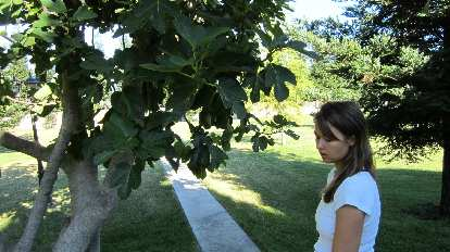 In front of a fruit tree.