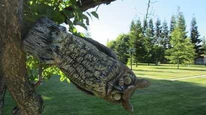 A rotating owl.