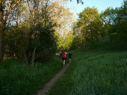 [Mile ~4] The Sulphur Springs trail was wonderfully lush as was most of the course.