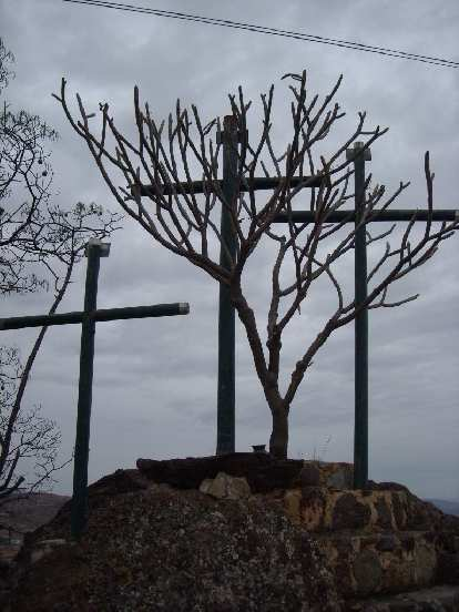 Crosses and what looked like a manzanita outside of Casa Sagrada.