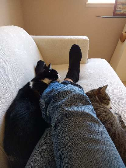 Oreo and Tiger taking an afternoon nap on the couch with me.
